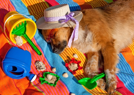 sleep well: Dog on holiday Stock Photo
