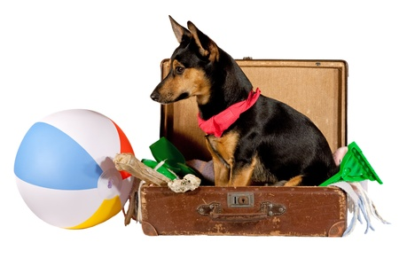 preperation: Dog in a suitcase Stock Photo