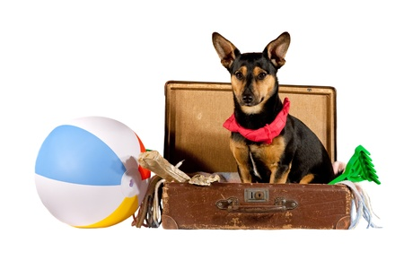 Dog in a suitcase Stock Photo