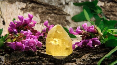 quartz crystal: Citrine gem stone on wood, with prunella blossoms