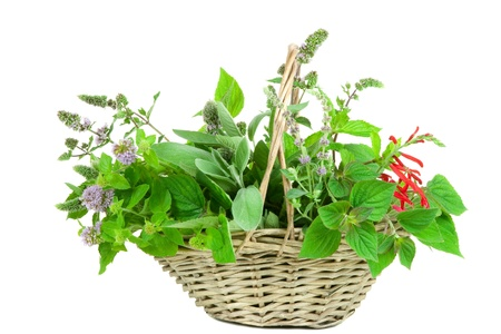 Basket with sage and mentha, different genus Stock Photo