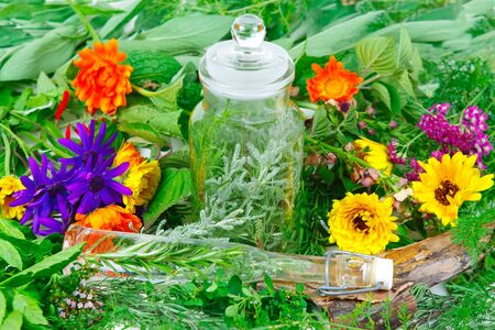 alternative practitioner: Herbs for medicine or cooking fresh from the garden