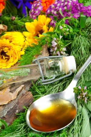erbe aromatiche: Erbe aromatiche fresche per la medicina a base di erbe in un cucchiaio Archivio Fotografico