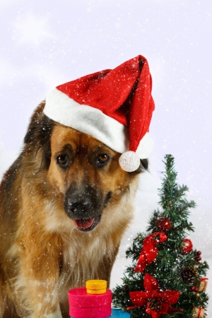 Big dog is waiting for christmas while snowing photo