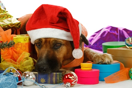 Chien de race mixte rêve de Noël Banque d'images