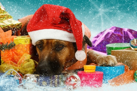 Big snowbound dog is waiting for christmas Stock Photo - 10952314