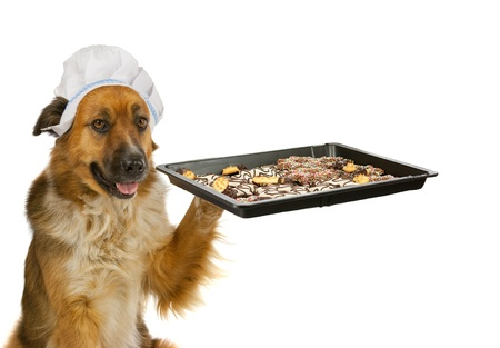 baking cookies: Dog with a chef�s hat is offering christmas cakes