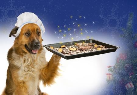 Chien avec un chapeau des chefs propose des gâteaux de Noël Banque d'images