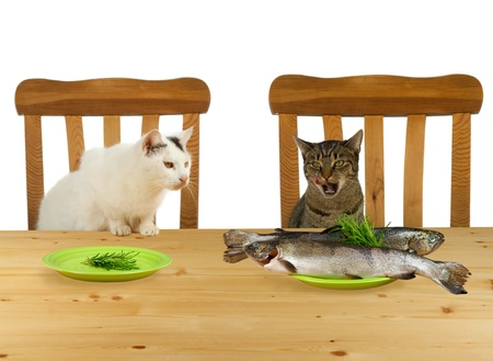 Two cats sitting at table with one plate with fish