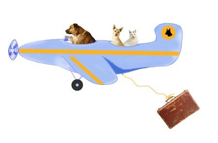 Les animaux, chiens et un chat sur le transport aérien