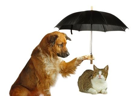 lluvia paraguas: El perro es la protecci�n de un gato con un paraguas Foto de archivo