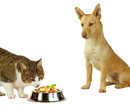 Cat�s only, a cat is eating a delicious meal  while a dog is only looking
