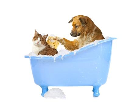 champu: Cat-lama, el perro y el gato en una bañera Foto de archivo