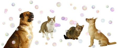dogs play: Happy Dogs and Cats with Bubbles