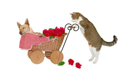 small basket: Sleep, Little Child, sleep...Cat is taking care of a little dog in a baby carriage, on white background Stock Photo