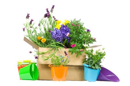 Box with fresh flowers on white background photo