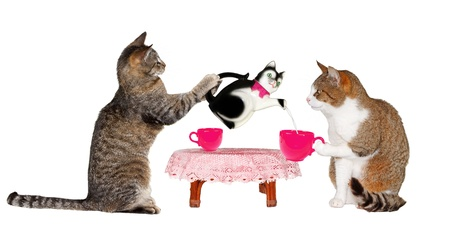 Two cats drinking milk at Table on white background