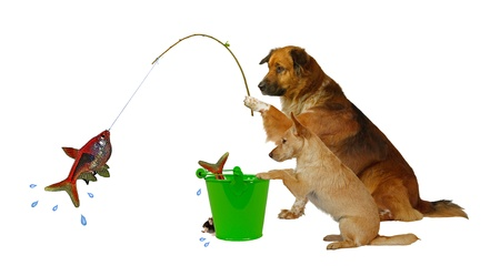Fishing Dogs Stock Photo - 13653120