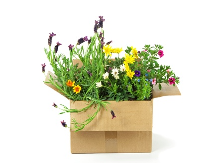 Flowers in a parcel Stock Photo - 13653116
