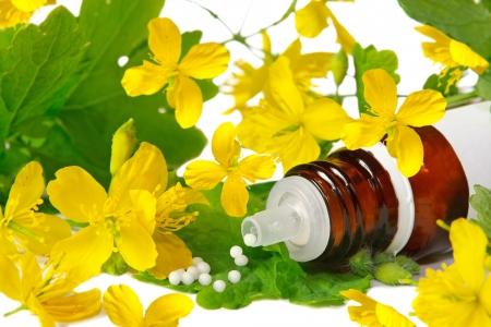 homeopatia: Chelidonium para la homeopatía Foto de archivo