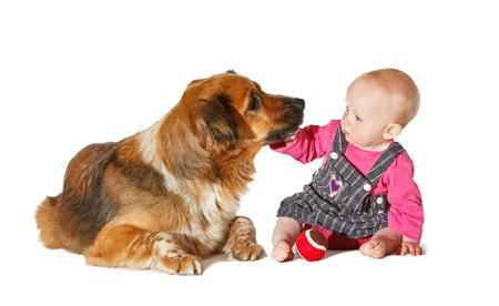 9 months old: No me beses ... Beb� de 9 meses de edad y perro jugando en bachground blanco Foto de archivo