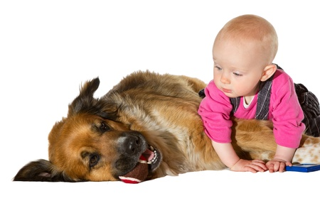 9 months old: Creo que eso es bola de la m�a! Beb� de 9 meses de edad y perro jugando en bachground blanco