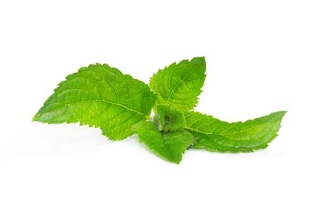 flavouring: Fresh aromatic mentha or mint leaves for use in cooking, as a herbal tisane, essentail oil or for flavouring