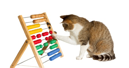an abacus: Conceptual image of a clever cat mathematician sitting playing with a large colourful abacus moving it around with its paw as it performs calculations