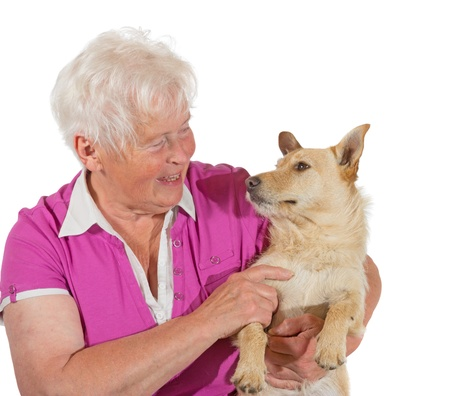 trusting: An elderly grey-haired woman smiles lovingly at her jack russel terrier as she holds him in her arms, studio portrait isolated on white Stock Photo