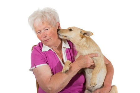 Little jack russel terrier dog displays his love by licking his elderly female owner on the neck, studio portrait on white photo