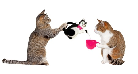 cats playing: Portrait of two cats facing each other, one raised on its hind legs carfully pouring from a ceramic cat charicture teapot into a pink cup held by the second, as they enjoy their teatime