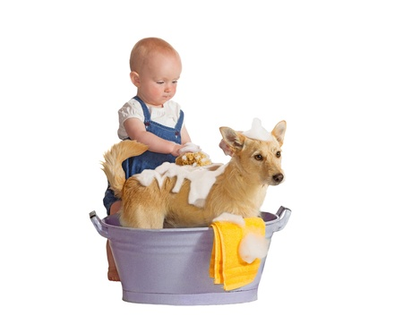 Cute baby washing yellow dog - isolated on white