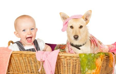 maliziosa: Mischievous bambino felice giovane e cane con un'espressione colpevole seduto nel cesto della biancheria coperto di lavaggio