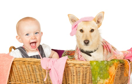 Mischievous happy young baby and dog with a guilty expression sitting in the laundry basket covered in washing