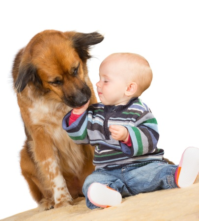 Faithful family dog gently licking the hand of a cute baby as they sit together on the floor with a white background Stock Photo