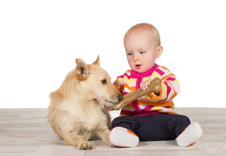 Cute little baby offering a jack russel terrier dog a chewy artificial bone as the two sit close together on the floor photo