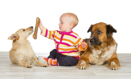 Two dogs flanking a cute baby which is offering the jack russel terrier a chewy bone watched in envy by the gentle crossbreed