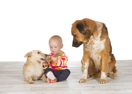 Little baby sitting on the floor flanked by the two family pets feeding one dog a chewy bone watched enviously by another photo