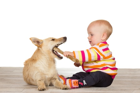 Cute little baby sittting on the floor with a jack russel terrier offering it a chewy artificial bone