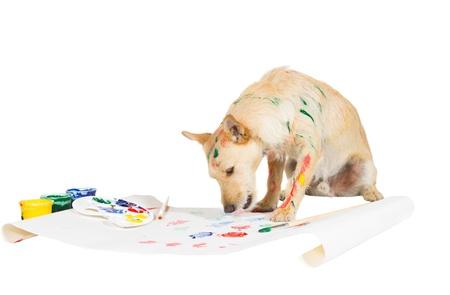 Creative jack russel terrier peinture avec sa patte sur une grande feuille de papier à partir d'une palette colorée de la peinture tout en strié avec de la peinture elle-même