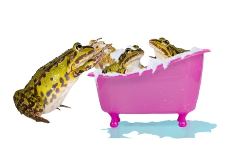 overflowing: Fun humorous image of a family of frogs or toads enjoying a bubble bath full of soapy water with one outside scrubbing a baby Stock Photo