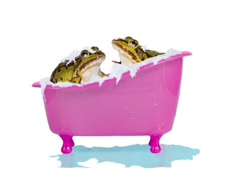 Fun image of two cute pet frogs enjoying a soapy bubblebath in a bright pink bathtub with overflowing water isolated on white photo