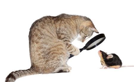 Imagen chistosa conceptual de un gato con miopía miope mirando a un pequeño ratón a través de una lupa aislado en blanco