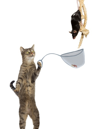 Fun conceptual image of an intelligent cat ratcatcher holding a net with a tasty titbit under the nose of a mouse clinging to a rope isolated on white photo