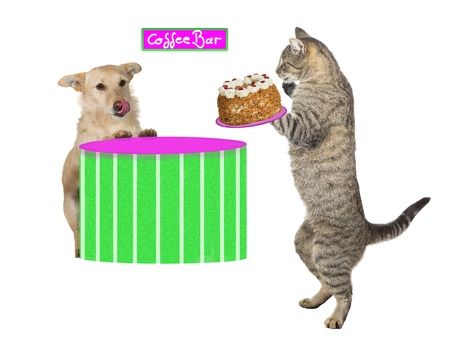 Lovely fun image of a cat standing on its hind legs holding a scrumptious cream cake photo