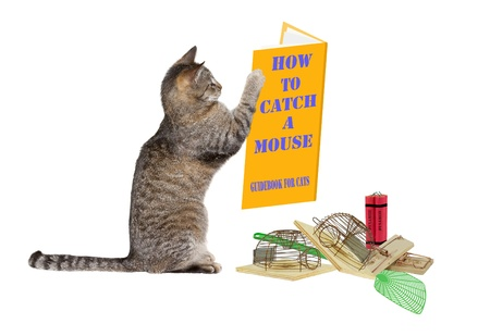 net book: How to catch a mouse Stock Photo