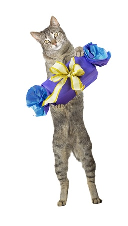Fun greeting card image of a cute cat standing on its hindlegs carrying a decorative gift with a large golden bow in its arms, studio portrait isolated on white photo