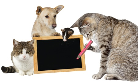 Intelligent tabby cat writing on a blank blackboard supported by its animal friends photo