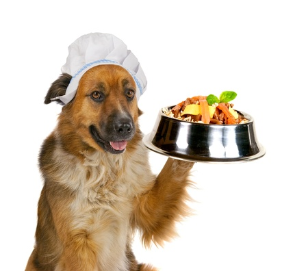 titbits: Cute big golden crossbred dog in a cap serving up a gourmet meal holding up a stainless steel dog dish balanced on its paw loaded with biscuits and tasty titbits isolated on white
