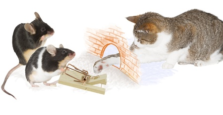 Humorous image of two cute little mice laying a trap for a cat enticing it to stretch through a hole in the wall with its paw while they stand ready to pounce with a loaded mousetrap photo